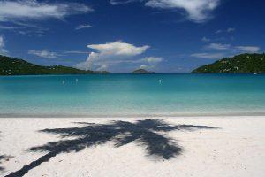 beach_palm-300x200